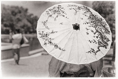 Under the Blossom (minus6 (tuan)) Tags: minus6 d810 85mm houston japanfestivalhouston mts parasol blossom cherry