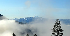 Above the Clouds (Dru!) Tags: stsailes hemlockvalley chehalis baker kulshan fraservalley bc britishcolumbia canada cloud fog tree silhouette volcano