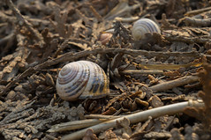 Shells Amidst the Textured Ground (Mark Christo) Tags: shells snails nature texture closeup earthy ground