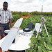"""""""Sky Walker"""" advances phenotyping in Southern Africa"""