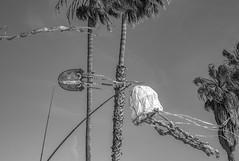 Jelly in the Sky (jshyshka) Tags: 40mm voigtlander beach kite sky leica m8 jellyfish