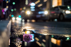 The despised rose and the city (hector_cbs) Tags: rose despised city bokeh citylights lights night bokehballs color downtown flower mothersday