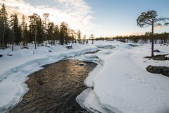 White Paradise (Tiomax80) Tags: myfavoriteplace trollforsen piteälven pitea natur nature landscape white paradise moskosel water river rapids cascades frozen snow heaven calm allalone alone lapland laponie laponia sverige swede sweden swedish norrbotten vidsel forsen still trees forest woods sunset blue sunlight golden gold naturalreserve reserve natural tiomax nikon d610 samyang 14mm 14 neige nieve pitealven
