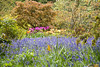 Custable Burton Hall, North Yorkshire (Kingsley_Allison) Tags: bluebells tulips acers constableburtonhall yorkshire yorkshiredales statelyhomes gardens flowers nature leyburn tulipcollection tulipfestival greatbritishgardens nikon d7200