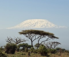 Iconic Amboseli (The Spirit of the World) Tags: kilimanjaro mountain eastafrica africa kenya landscape acaciatrees trees nature amboseli nationalpark gamereserve snow glacier iconic bush