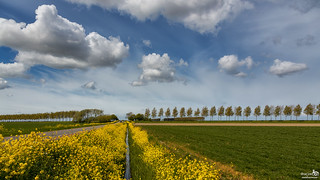 The ditch sides with rapeseed