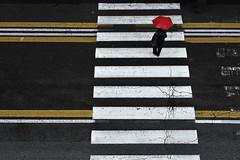 A rainy day (lorenzog.) Tags: rainyday umbrella people viaindipendenza bologna walking colours colors vividcolours contrast nikon d700 street streetphotography ilobsterit urbanstreet sidewalk urbanphotography crossing zebracrossing crossingthestreet pedestriancrossing crosswalk