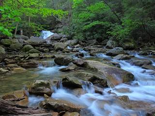 Rapids of Morgan Run