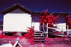 6th and Comal (infobong) Tags: austin eastaustin colorinfraredfilm colorinfrared infraredfilm infrared