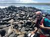 Viajefilos en el Sea Star Journey 001 (viajefilos) Tags: bauset viajefilos ecuador sudamerica galapagos lae laespañola