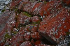 Mousse, Lichen et Granite.. Moss, Lichen and Granit.. (CHAM BT) Tags: pierre lichen mousse granite rivière rouge vert minéral stone rock moss granit river red green colonisation cohabitation ensemble together vie life