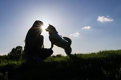 the love of a dog (beeldmark) Tags: netherlands オランダ mikan nederland shiba shibainu silhouette 柴犬 thenetherlands nl smcpda21mmf32al smcpda21mmf32 shibalouette