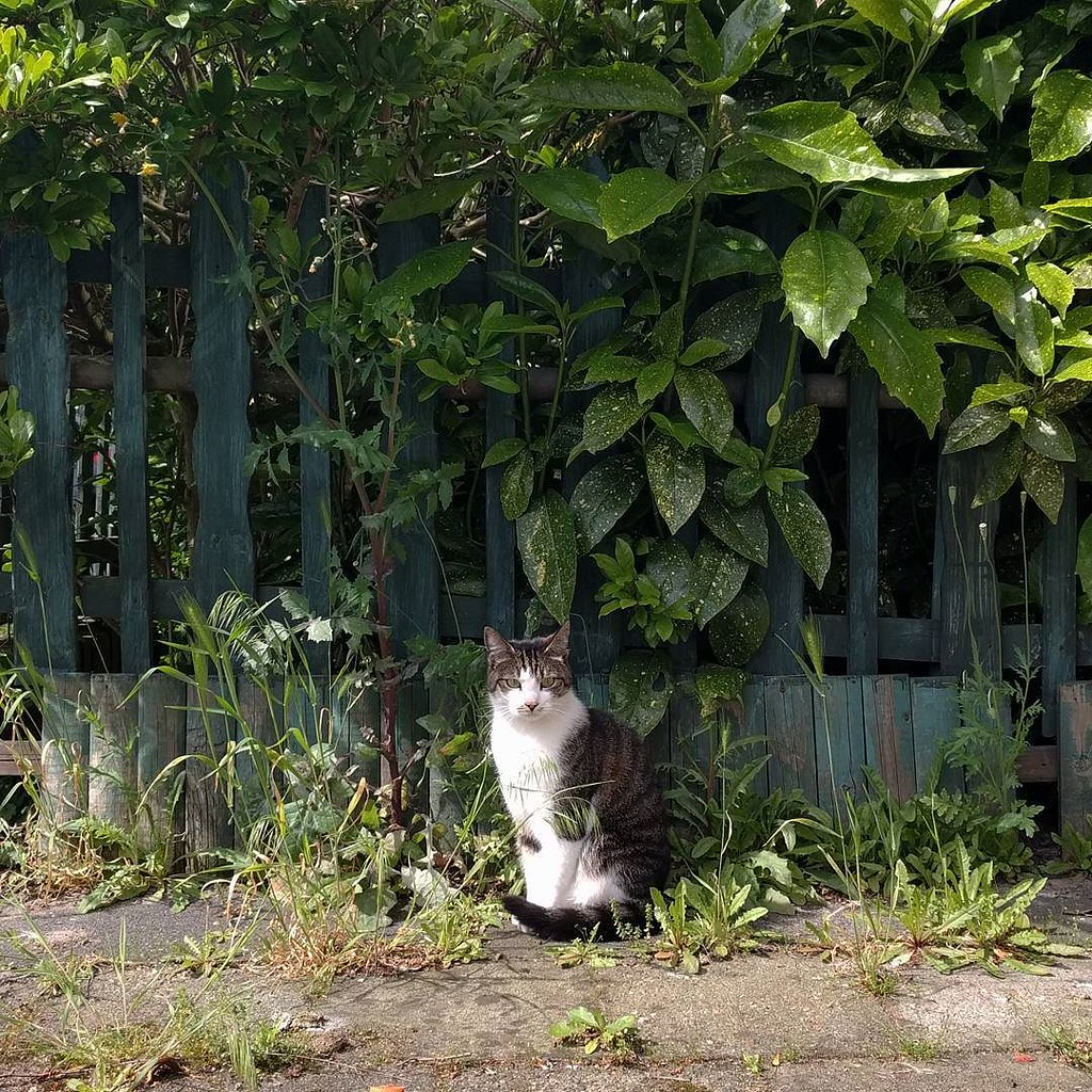 Another cute neighbour