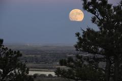Moon Slippers (courtney_meier) Tags: moon moonrise frostmoon beavermoon fullmoon pinusponderosa pine pineneedles bluehour clouds boulder bouldercounty southboulder highplains plains colorado supermoon