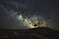 Alone. (Eden Bhatta) Tags: milkyway galaxy thetaintedtripod longexposure nightsky nightscape rokinon24mmf14 canon5dmarkiii starrysky starscape stardust milkyhighway