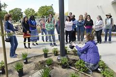 20170424 Hummingbird Garden Planting (UC Davis Arboretum & Public Garden) Tags: 42017 hummingbird landscaping pollunator staff wildlife davis ca usa