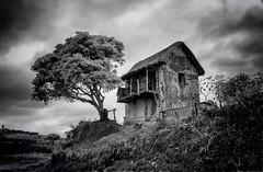 Malagasy House (Rod Waddington) Tags: africa afrique madagascar malagasy house blackandwhite tree outdoor