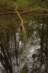 Pond-ered (Henry Hemming) Tags: pond lake mere reflections tree iron smelting wood spring forgotten disused abandoned