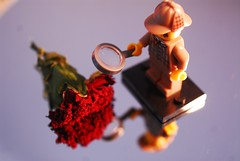 Who killed the carnation? (Lenaprof) Tags: macromondays crime