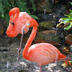 Key West (Florida) Trip 2016 0227Ri sq (edgarandron - Busy!) Tags: florida keys floridakeys keywest butterflyhouse keywestbutterflyandnatureconservatory bird birds flamingo