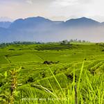 Terrace Field at Pu Luong thumbnail