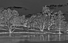 Version 2:  BW Inversion (brev99) Tags: sigma1770os d7100 colorefex landscape trees park clouds pond reflections perfecteffects17 on1photoraw2017 ononesoftware inversion blackandwhite photoshopelements12 texturizer sandstone