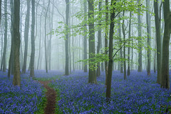 Crawley Wood II (Stu Meech) Tags: bluebell wood crawley ashridge estate hertfordshire nikon d750 24120 leefilters polariser stu meech