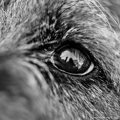 Macro Monday - Eye (roseysnapper) Tags: borderterrier macromonday nikkor105mmmicrof28 nikond810 hmm macro ball eye focus reflection monochrome blackandwhite bw nikcollection silverefexpro