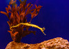 Sony A7M2-04882 (strat-driver) Tags: acquarium underwater marine