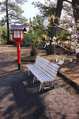 170327a5777 (allalright999) Tags: canon eos m3 shrine japan kagoshima sakurajima 日本 鹿兒島 櫻島 神社 月讀