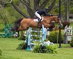 Old Salem Horse Show (dqpagan) Tags: usef usequestrian oldsalem newyork actionshot action telephoto 55300 nikond3200 d3200 nikon equestrian horsejumping equine horses horse jumpers oldsalemfarm osfspring
