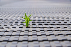 There is hope (Phototravelography) Tags: hope plant grey love metal green perspective depthoffield photography art loneliness growth plantpower powerplant