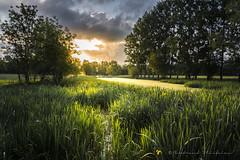 Ouverture (Bertrand Thiéfaine) Tags: boiredeloire prairie herbe arbre soleillevant nuages jonquilles fleurs paysage champ printemps d750 nikon
