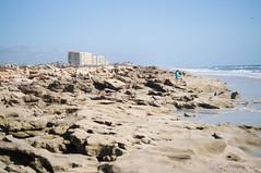 coquina rock on the shore (liangjinjian) Tags: florida marineland palmcoast usa coquinarock geo:lat=2963921639 geo:lon=8119981333 geotagged 美国