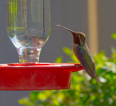 2017-139 Hummingbird at the Feeder