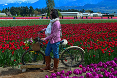 Tulips of the Valley Festival (SonjaPetersonPh♡tography) Tags: digitalart photopainting tulips festival blooms flowers topazglow nikon nikond5200 chilliwack fraservalley spring tulipsofthevalley tulipsofthevalleyfestival fields tulipfields landscape tulipsfields tulip gardens britishcolumbia canada blooming springtime tulipfestival people visitors