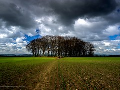 Ashover Derbyshire (stevef16G) Tags: view em1 olympus fields trees dales landscape derbyshire ashover