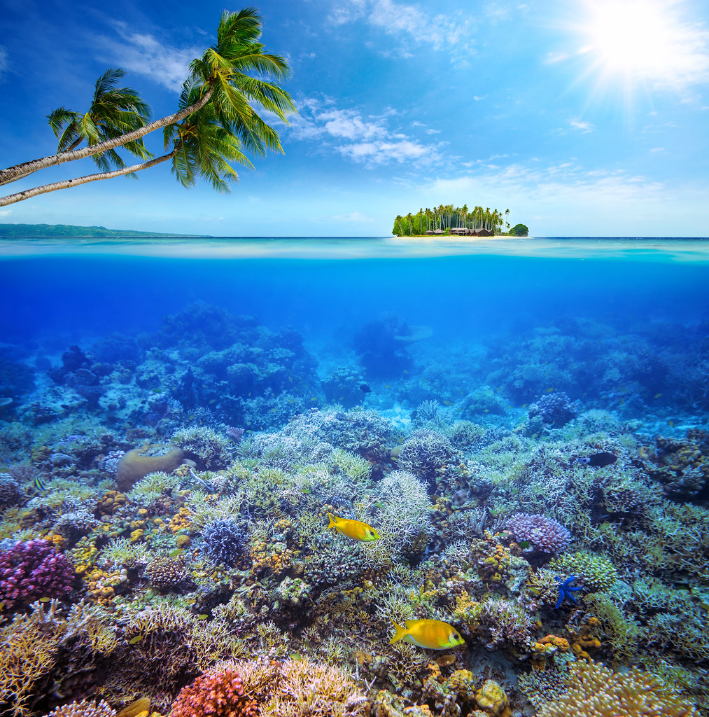 The World's Best Photos Of Sunlight And Underwater