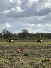 #holland #nature #drenthe #reesdal (antalkatuin) Tags: holland nature drenthe reesdal
