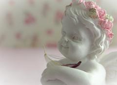 wish upon an angel (babs van beieren) Tags: angel dandelion seed wish nostalgic romantic soft pink rose dream closeup pastels light white 7dwf monday freetheme