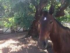 Horse (freelancing god) Tags: railscamp northernterritory mountbundystation railscamp21