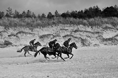 Curracloe Strand, Wexford (fintanbrowne) Tags: horse horses beach strand gallop wexford