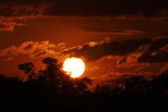 _DSC3771d10u77 (wdeck) Tags: mooswaldfreiburg sunset sonnenuntergang sonne sun sonyslta77v sigma