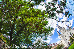 20170423_14161901_HDR.jpg (Les_Stockton) Tags: frenchquarter hdrefex highdynamicrange neworleans hdr tree vacation louisiana unitedstates us