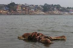 IMG_6272 (anthrax013) Tags: india varanasi corpse dead death bones skull flesh decomposition rot decay necro necrophilia