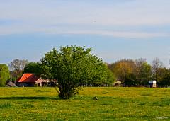 Fleurs Landscape (JaapCom) Tags: jaapcom landscape flowers flower fleurs clouds wezep landed landschaft paardebloemen bloemen bloem bloeien dutchnetherlands holland natural farmhouse