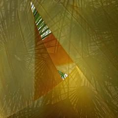Palmeras - Palms. Elche. Spain (COLINA PACO) Tags: palms palmeras elche spain españa espagne spagna franciscocolina