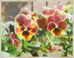 The counterfeit and counterpart of Nature is reproduced in art. (Henry Wadsworth Longfellow) (boeckli) Tags: flowers pansy flower blume blumen blossom blooms plants pflanzen bunt farbig colourful colorful texture texturen renoir tmi henrywadsworthlongfellow topaz topazimpression2 stiefmütterchen photoborder outdoor painterly gemalt netartii flora fleur nature garden
