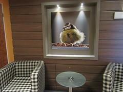 IMG_7914_Fotor01 (Ela's Zeichnungen und Fotografie) Tags: hannover hotel bild flur lampenlicht tier vogel meise tisch sessel evakuierungstag
