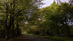 The Avenue (Englepip) Tags: avenue road trees outdoor landscape lightandshade spring